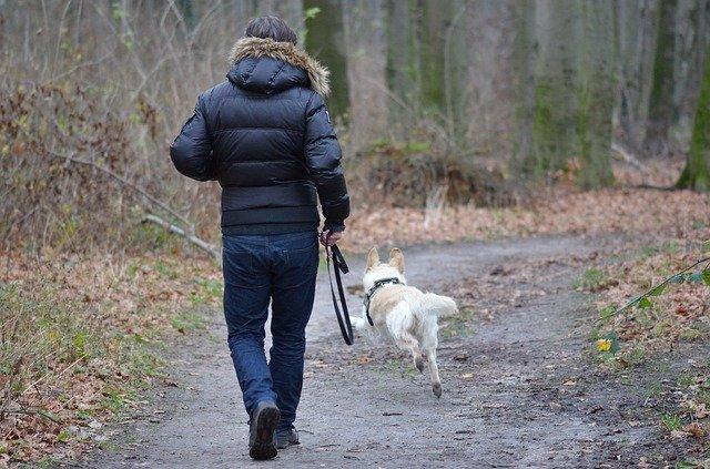 Ako behať so psom