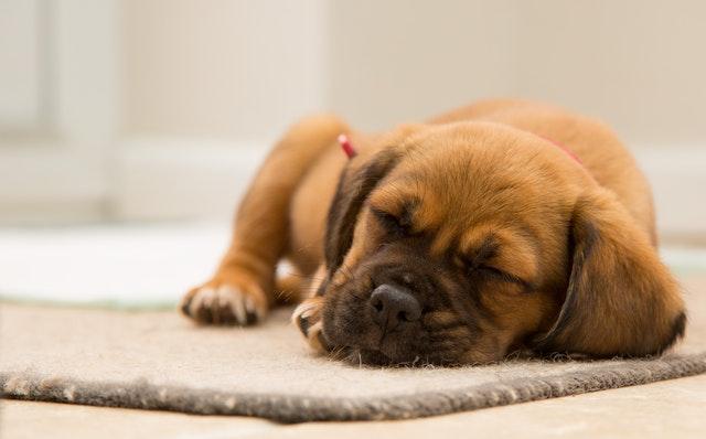 spokojne spiace šteniatko